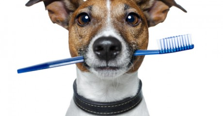 Best Teeth Cleaning For Small Dogs