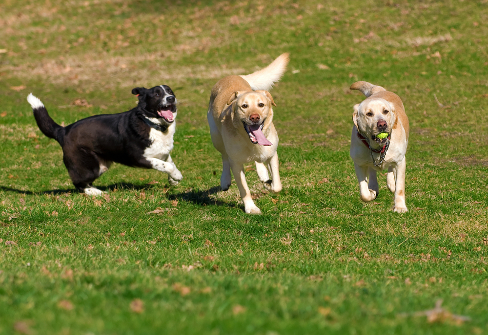 Best Dog Parks in Suwanee
