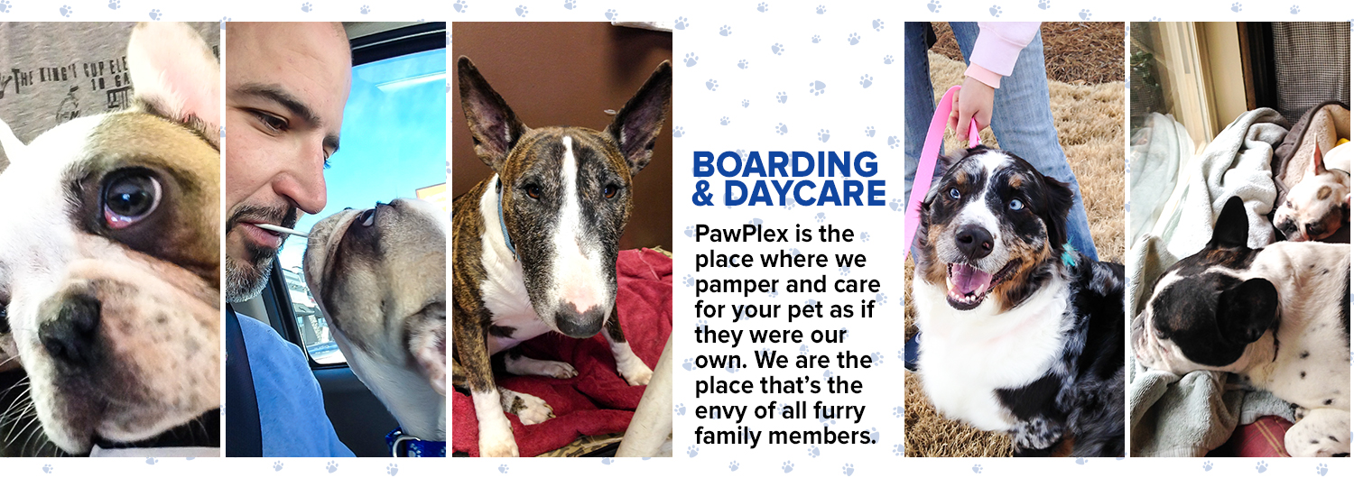 Pet Boarding & Daycare at The PawPlex