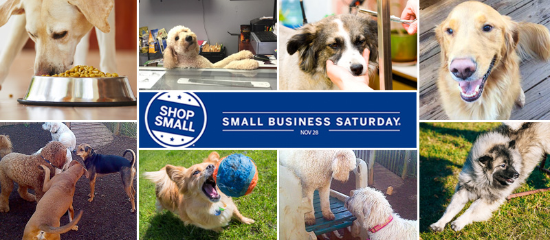 Paw Plex | Small Business Saturday